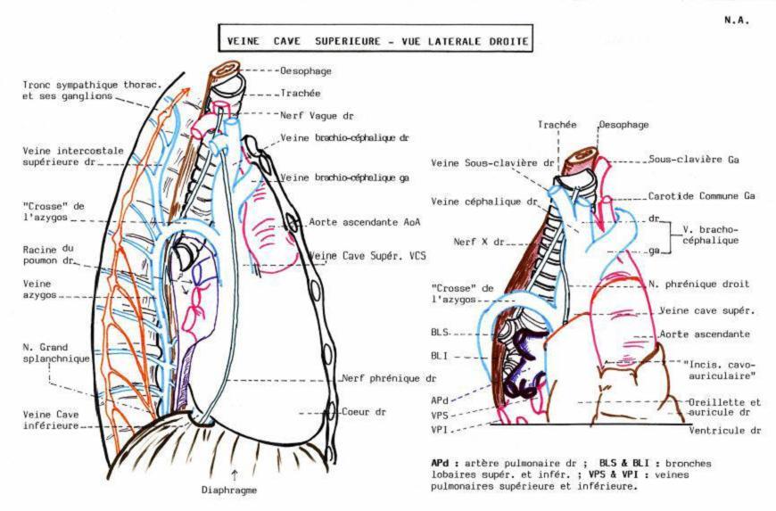 Kardiotsentr kemerovo la chirurgie vasculeuse