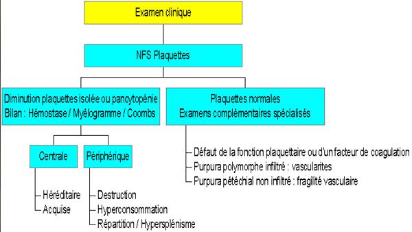 Cas Clinique : PURPURA - Urgences-Online